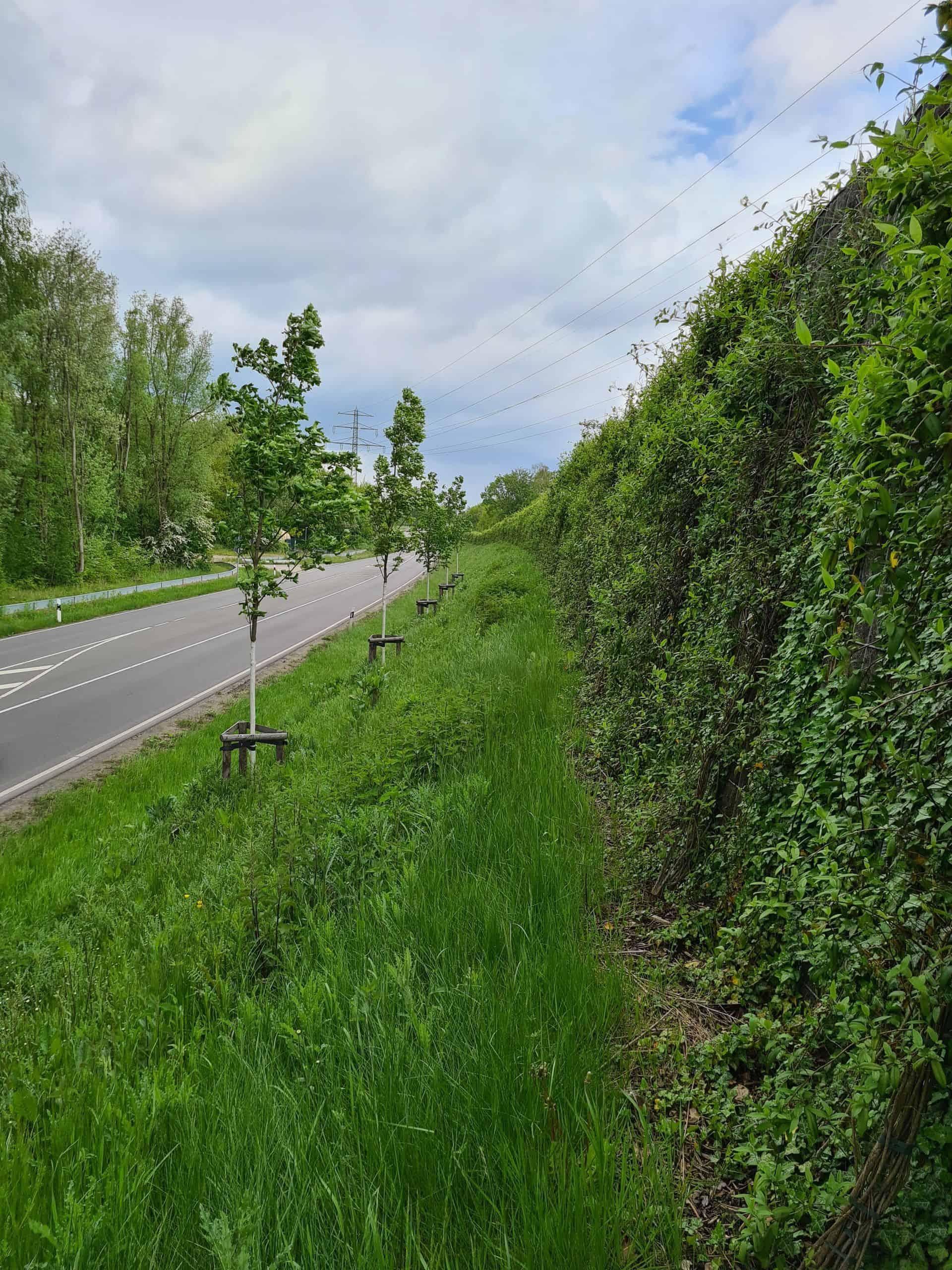 grüne Lärmschutzwand an einer Straße in Pinneberg