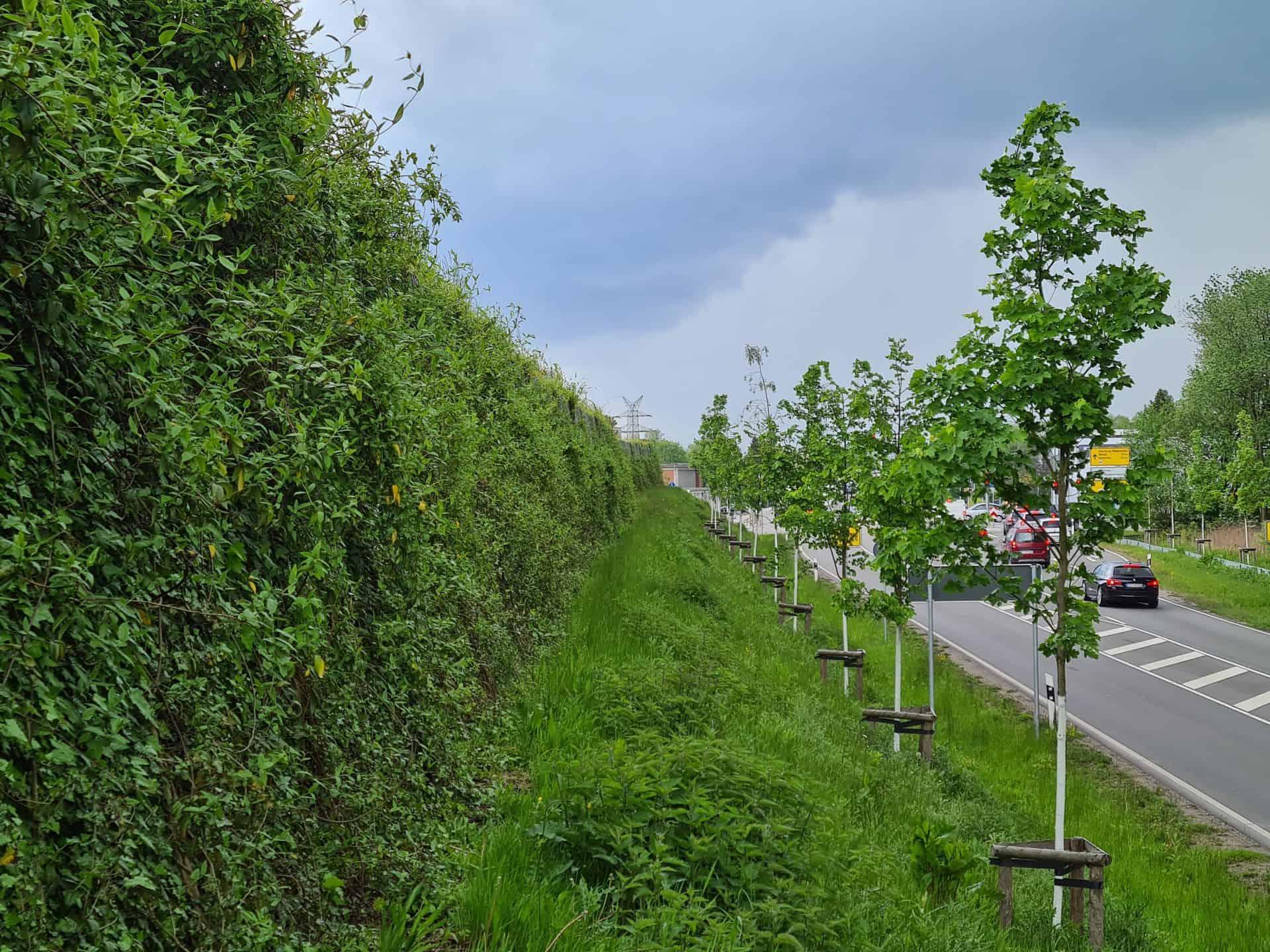 üppig begrünte Lärmschutzwand in Pinneberg