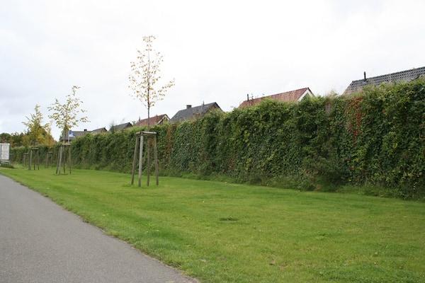 Begrünte Lärmschutzwand an einem Wohngebiet in Steinfurt